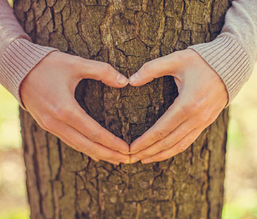 woman making a heart with her hands on the trunk of a tree
