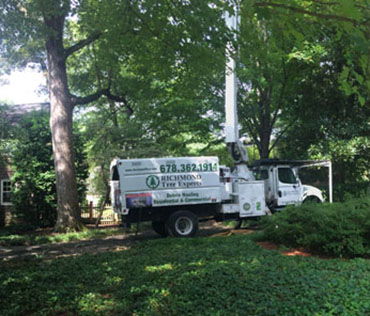 bucket truck in a wooded, residential, area removing deadwood from a stand of trees